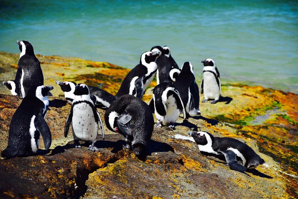 fotos_aus_kapstadt_pinguin_kolonie_boulders_beach